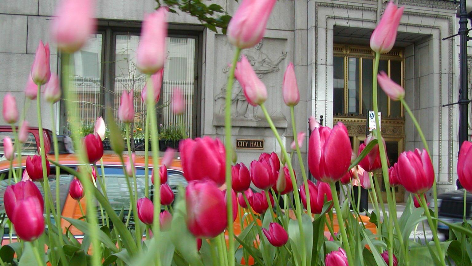 LaSalle Street at City Hall